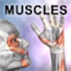 Product details of Learn Muscles: Anatomy
