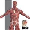 Visual Anatomy alternatives