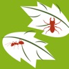 Product details of Plant diseases and pests