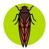 Cicada Safari alternatives