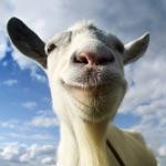 Goat Simulator App Contact