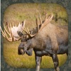Product details of Moose Hunting Calls